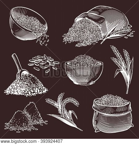 Hand Drawn Sketch Rice. Vintage Asian Grains And Ear, Bowl With Jasmine Or Basmati, Pile Of Paddy, S