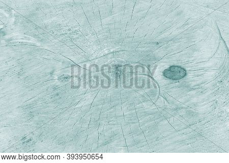 Light Background. Swamp Background. Painted Cut Of A Tree. Traces Of Sawing A Tree Trunk.