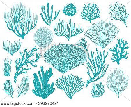 Coral Reef Or Seaweeds Vector Underwater Plants. Aquarium, Ocean And Undersea Algae Water Life Isola