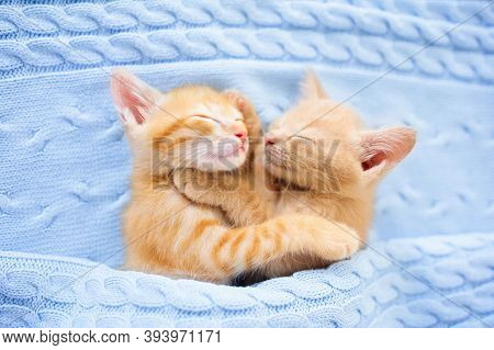 Baby Cat Sleeping. Ginger Kitten On Couch Under Knitted Blanket. Two Cats Cuddling And Hugging. Dome