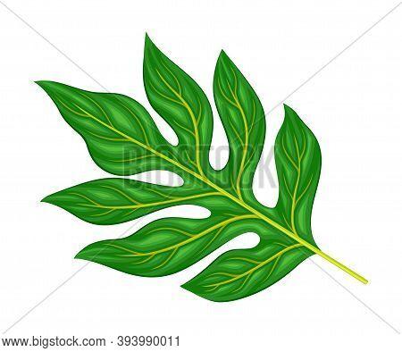 Gummy And Thick Jackfruit Leaves With Oblong Leaf Blades Vector Illustration