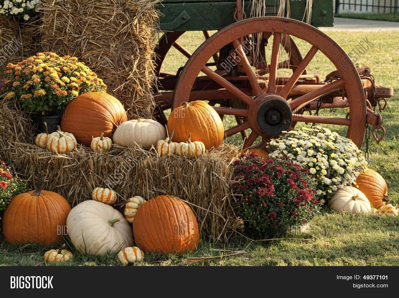 Autumn Pumpkins Mum Image Photo Free