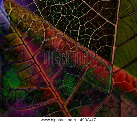 Abstract Vegetation Texture