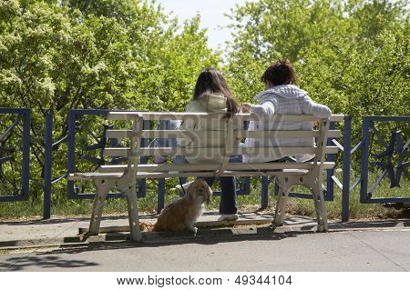 two girls on a bench and their dog on a sunny day poster