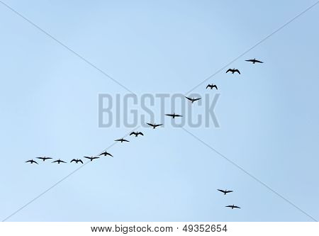 Geese flying in formation through a blue sky