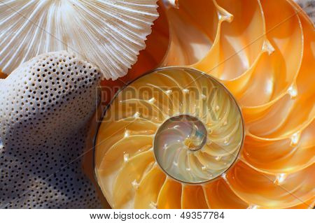nautilus shell section and a piece of coral as background