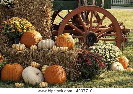 Autumn Pumpkins and Mum Display