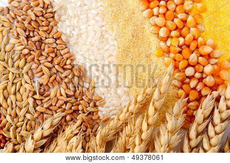 bunte Getreidekörnern und Weizen Ohren