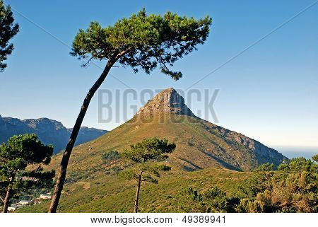 Mountain In Capetown, South Africa