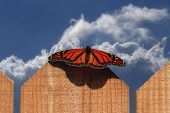 Monarch Butterfly on fence with blue cloudy sky poster