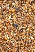 Bird seed a variety of millet sunflower seed cracked corn and other seeds used as bird food. poster