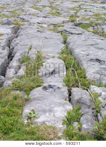 Burren Limestone Pavement