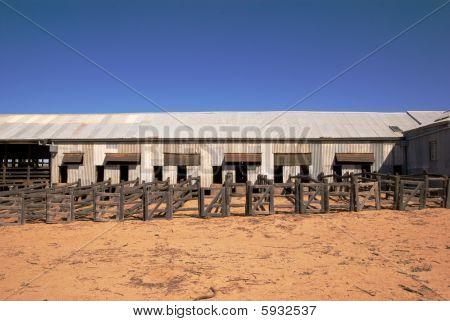 Abandoned Shearing Shed