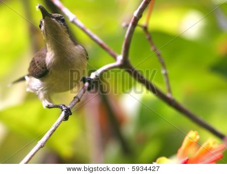 poster of Birds in Summer - Resting on a branch about to fly off