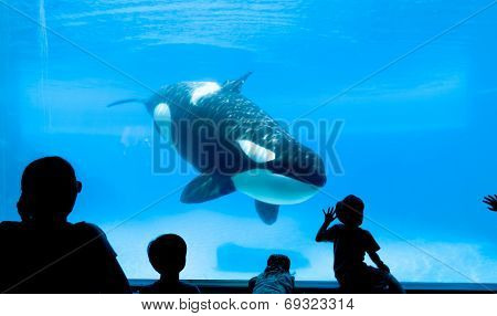 Killer Whale Aquarium