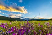 Indian Paintbrush flowers at sunset in Moraine Park- Rocky Mountain Colorado poster