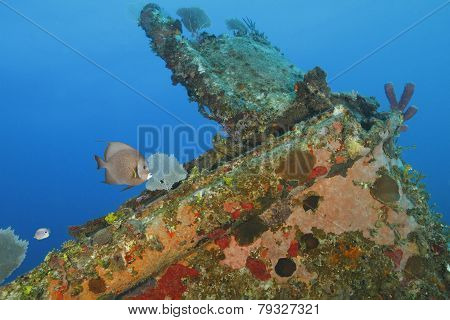Tropical Fish And Coral Encrusted Shipwreck - Roatan, Honduras