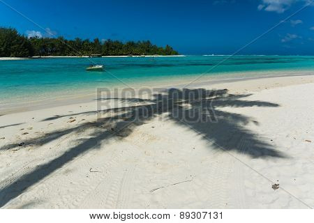 Shadow Of A Palm At A Beach In Rarotonga, Cook Islands