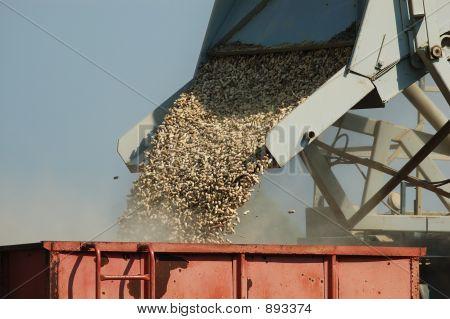 Loading Peanuts