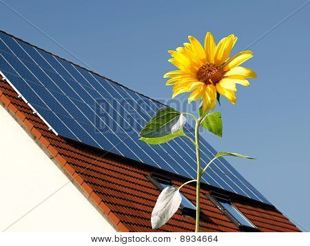 Solar cells on a roof behind sun flower