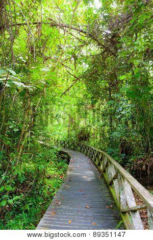 Boardwalk in dense rainforest in niah cave malaysia borneo poster
