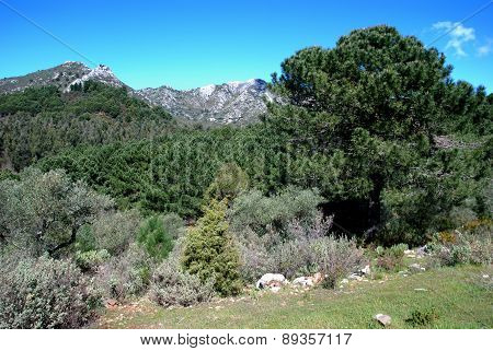 Trees in mountains, Marbella.