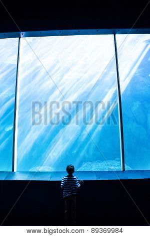Young man looking at a giant aquarium