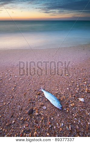 Fish on the seashore. Nature composition.
