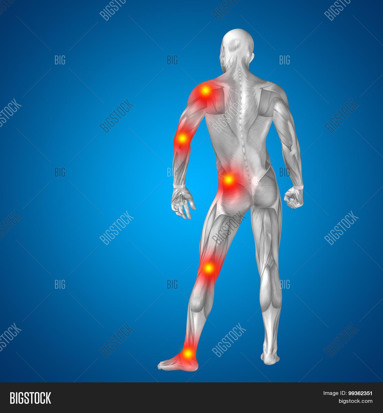 3d Human Man Muscles Image Photo Free Trial Bigstock