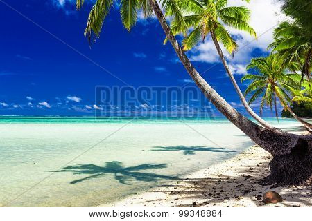 Small beach with palm trees over tropical water at Rarotonga, Cook Islands