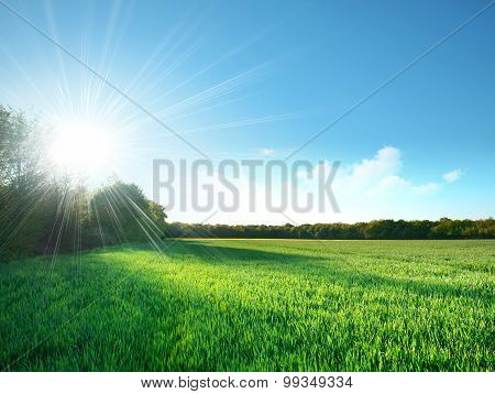 Green Field Under The Sun