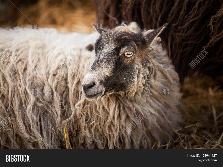 Close On Long Hair Image & Photo (Free Trial)   Bigstock