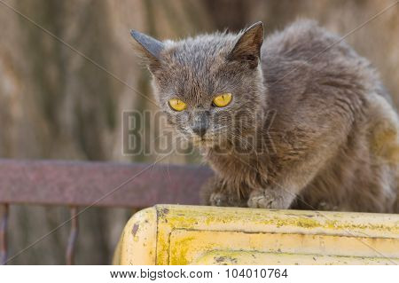 Alien cat with yellow eyes