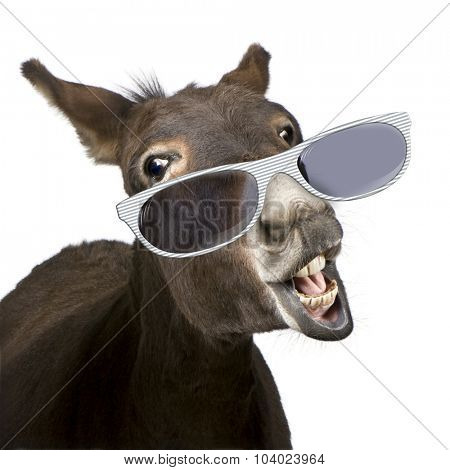 donkey (4 years) wearing glasses in front of a white background