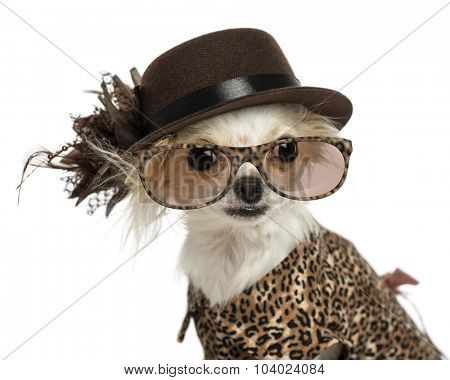 Close-up of a Chihuahua wearing a hat and glasses, isolated on white