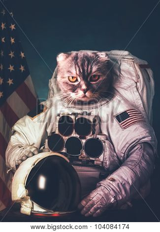 Beautiful cat astronaut. Elements of this image furnished by NAS