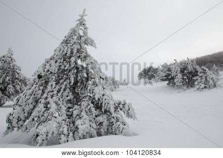 Lonely Tree In A Snowy Winter Forest