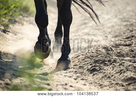 Hooves In Dust