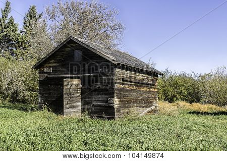Old Abandoned Chicken Coop - Open Door