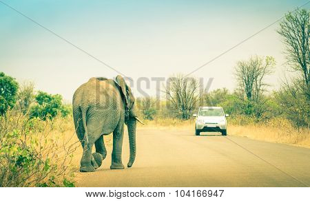 Elephant Crossing The Road At Safari Park - Concept Of Connection Between Human Life And Wildlife