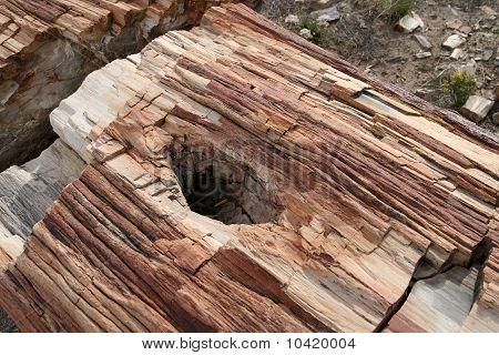 Petrified Forest NP, Arizona