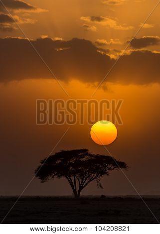 Sunset Amboseli