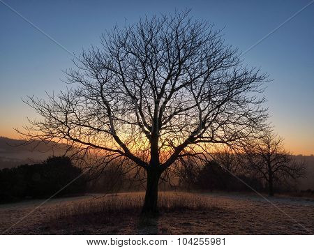 Silhouette of Tree at Sunrise West Wycombe Buckinghamshire UK