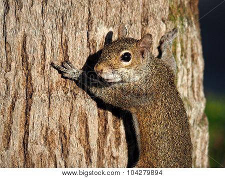 Tree Hugger Nature Lover