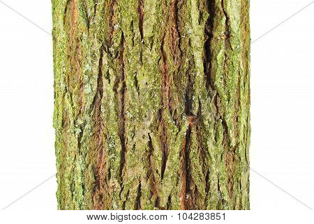 Goat willow (Salix caprea) bark