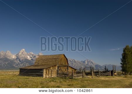 Mormon Barn And Tetons With Evergreen