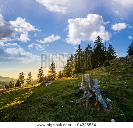 Stump Infront Of Fir Forest On Hillside At Sunrise