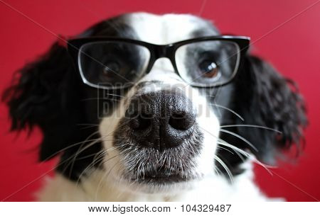 Doggy Vision