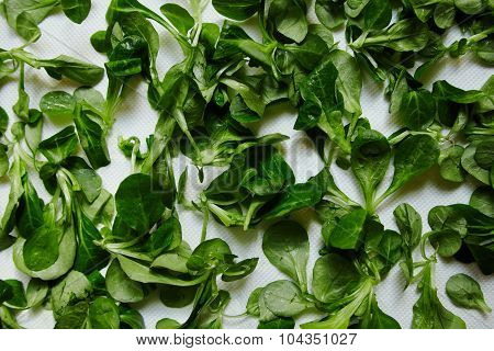 Green Fresh Leaves Watercress Salad On White Paper
