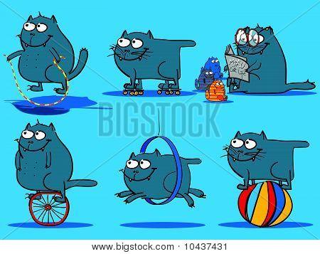 cat activities